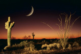Arizona-Ocotillo And Saguaro Photographie