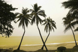 China-Palm Trees Hainan Island Prints