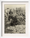 Farmer Collecting Husked Corn to Load into a Horse Drawn Wagon in Washington County, Maryland, 1937 Prints by Arthur Rothstein