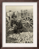 Farmer Collecting Husked Corn to Load into a Horse Drawn Wagon in Washington County, Maryland, 1937 Posters by Arthur Rothstein