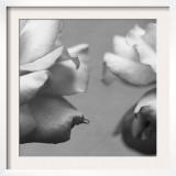 Rose Petals I Posters by Nicole Katano