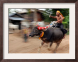 A Cambodian Boy Rides on His Buffalo Through a Village Framed Photographic Print