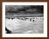 U.S. Reinforcements Wade Through the Surf as They Land at Normandy Framed Photographic Print