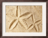 Starfish Imprints Art