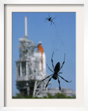 Spiders Hang from Their Web Near the Space Shuttle Atlantis Framed Photographic Print