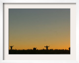 Bolivian Aymaras Raise Their Arms Waiting for the First Rays of Sunlight to Celebrate New Year Framed Photographic Print