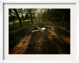 A Japanese Man Naps Among the Trees Inside Tokyo's Yoyogi Park Tuesday, June 27, 2006 Framed Photographic Print by David Guttenfelder