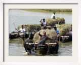Bangladeshi Farmers Carry Harvested Rice Crops Through a Canal on Buffalo Carts Framed Photographic Print