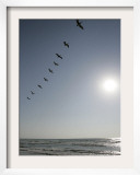 Pelicans Pass over Boca Chica, Texas Framed Photographic Print by Eric Gay