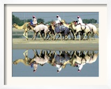 A Caravan of Racing Camels Return from a Morning Training Session Framed Photographic Print