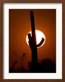 A Saguaro Cactus is Silhouetted as the Sun Sets Over the Southwestern Desert Framed Photographic Print