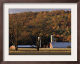Fall Colors and a Field of Dried Soybeans in Pleasant Gap, Pennsylvania, October 20, 2006 Framed Photographic Print by Carolyn Kaster