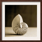 Sea Shells III Prints
