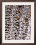 Performers Parade on a Float of Unidos Da Tijuca Samba School at Sambodrome in Rio De Janeiro Framed Photographic Print