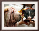 Dog and a Pig are Displayed During a Promotional Event at a Hong Kong Shopping Mall Framed Photographic Print