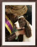 English Springer Spaniel after Winning Best in Show at the 131st Westminster Dog Show in New York Framed Photographic Print