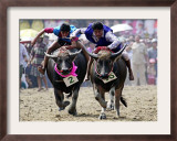 Jockeys Race in the 133 Rd Annual Traditional Water Buffalo Race in Chonburi Province, Thailand Framed Photographic Print