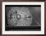 Beads of Dew Hang from the Bars of a Gate and Highlight the Web of a Spider on a Farm Near Glencoe Framed Photographic Print