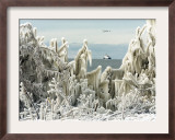 US Coast Guard Icebreaker Along the Shore of Lake Erie as Ducks Fly Overhead Framed Photographic Print