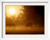 Horses Graze in a Meadow in Early Morning Fog in Langenhagen Near Hanover, Germany, Oct 17, 2006 Framed Photographic Print by Kai-uwe Knoth