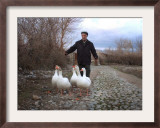 An Iraqi Villager Herds His Ducks Framed Photographic Print
