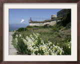Egret Flies over the lawns of Alcatraz, San Francisco, California Framed Photographic Print by Eric Risberg