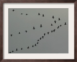 Birds Over Frankfurt Framed Photographic Print by Michael Probst