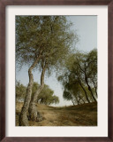 Ghaf, Emirates Desert Tree, Dubai Framed Photographic Print by Nousha Salimi