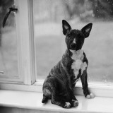 Doggy in the Window Photographic Print by Chaloner Woods