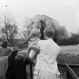 Children's Zoo Photographic Print by Chaloner Woods