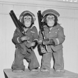 Chimpanzees As Policemen Photographic Print by H. Armstrong Roberts