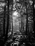 Ray of Sunlight Shining Through Trees in Wooded Area Photographic Print by H. Armstrong Roberts