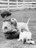 Little Boy Sitting in Grass With One Setter Puppy Licking Face and Another Lying in Grass Photographic Print by H. Armstrong Roberts