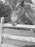 Horse Standing at Wooden Fence Photographic Print by George Marks