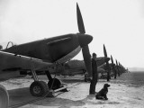 Spitfires at Duxford Photographic Print