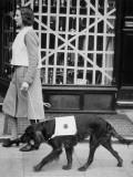 Blackout Dog Coat Photographic Print