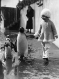 Penguin and Friend Photographic Print