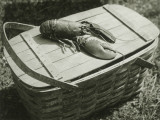 Lobster on Picnic Basket Photographic Print