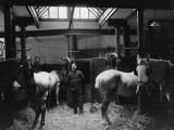 Red Cross Horses Photographic Print