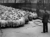 Law is My Shepherd Photographic Print