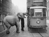 Hungry Elephant Photographic Print
