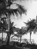 Palm Trees at Beach Photographic Print by George Marks