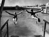 Swallow Dives Fotografisk tryk