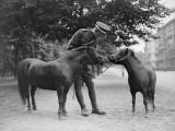 Pony Mascots Photographic Print