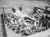 Duck Farm Photographic Print
