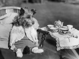 Puppy Picnic Photographic Print