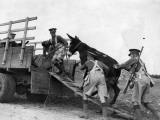 Army Donkeys Photographic Print