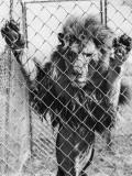 Lion's Den Photographic Print