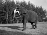 Elephant Lift Photographic Print by Charles Phelps Cushing