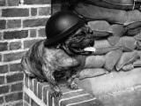 Dog Warden Photographic Print